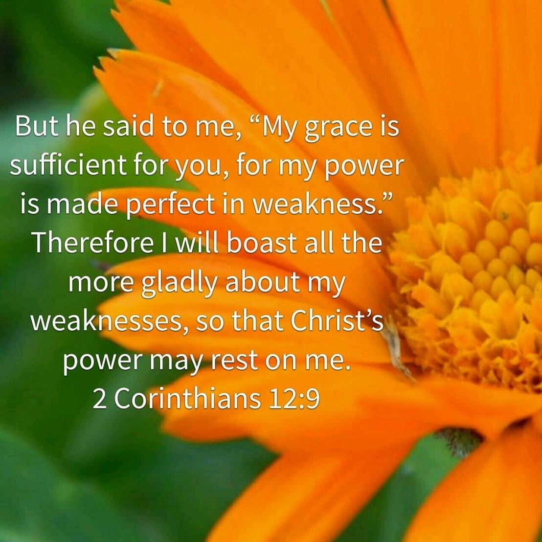 2 Corinthians 12:9 over large orange flower