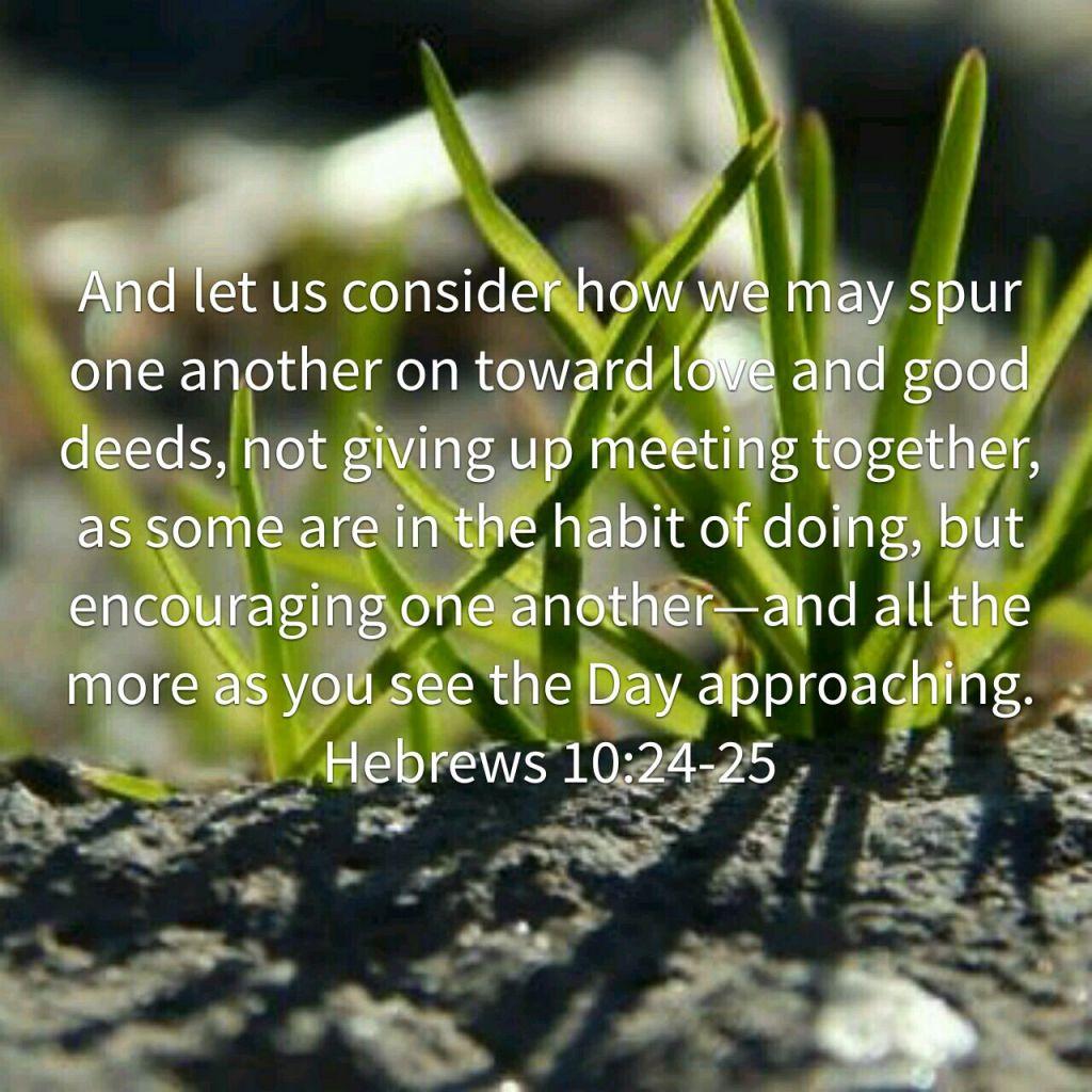 baby grass Hebrews 1-:24-25
